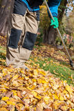 Raking the leaves during autumn time Royalty Free Stock Photo