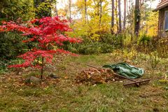 Raking of leaves in a garden in autumn royalty free stock image