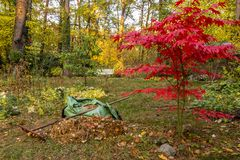 Raking of leaves in a garden in autumn royalty free stock photos