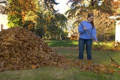 Raking Leaves Girl Next to Leaf Pile Royalty Free Stock Image
