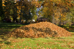 Raking Leaves Large Leaf Pile. A large pile of leaves in the fall stock photo