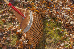 Raking Leaves off Green Lawn Royalty Free Stock Photography