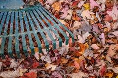 Raking leaves. Stock Image