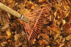 Raking leaves Royalty Free Stock Image
