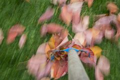 Raking leaves. Autumn work in the garden - long exposure time - accentuating movement in the photo royalty free stock photography