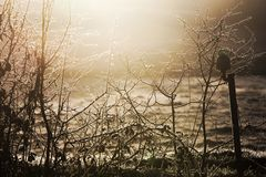 Raking winter light on frozen fence and meadows stock photography