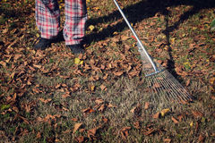 Raking the Yard Royalty Free Stock Photos
