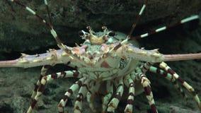 Rakowi I Morscy zwierzęta zdjęcie wideo