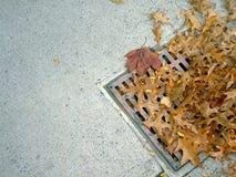 Ralle y las hojas 2 Foto de archivo