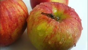 rallentatore bagnato dell'acqua dei gocciolamenti di colore della frutta della mela archivi video