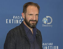 Ralph Fiennes Immagine Stock Libera da Diritti