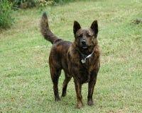 Ralph il cane Fotografie Stock Libere da Diritti