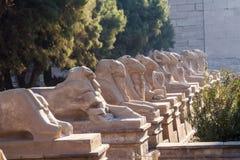 Ram朝向狮身人面象 库存照片