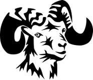 Ram Imagens de Stock