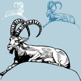 Ram. Hand drawn image of a ram / goat Stock Photography