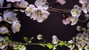 Ram av att blomma blommor arkivfilmer