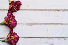 Ram av blommor på tabellen Royaltyfria Bilder
