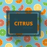 Ram av citruns Arkivfoto