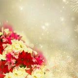 Ram av den rosa julstjärnablomman eller julstjärnan stock illustrationer
