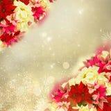Ram av den rosa julstjärnablomman eller julstjärnan royaltyfri illustrationer