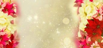 Ram av den rosa julstjärnablomman eller julstjärnan vektor illustrationer