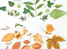 Ram av gräsplan- och gulingsidor, blommor äpplehösten undersöker torra leafs för sammansättning som plundrar vasen Royaltyfri Fotografi