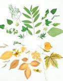 Ram av gräsplan- och gulingsidor, blommor Arkivbilder