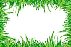 Ram av grönt gräs som isoleras på en vit bakgrund. Arkivfoto