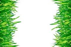 Ram av grönt gräs som isoleras på en vit bakgrund. Arkivbild