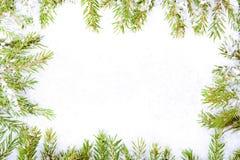 Ram av granfilialer och snow royaltyfria foton