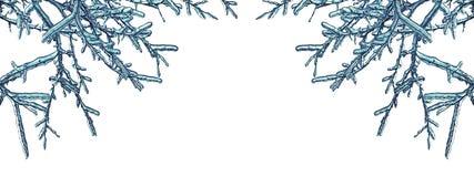 Ram av iicyträdfilialer som isoleras på en vit bakgrund royaltyfria bilder