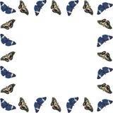 Ram av isolerade fjärilar med kopieringsutrymme på vit bakgrund Royaltyfri Foto