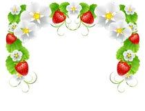 Ram av jordgubbar Stock Illustrationer