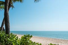 Ram av kokosnötpalmträdet på stranden Royaltyfria Foton