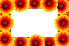 Ram av ljus blommagaillardia runt om isolerad vit ram Modell med vykortet Lekmanna- lägenhet, bästa sikt, kopieringsutrymme royaltyfri bild