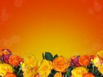 Ram av mång--färgade rosor royaltyfria foton
