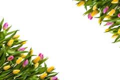 Ram av mångfärgade tulpan på en vit bakgrund arkivfoton
