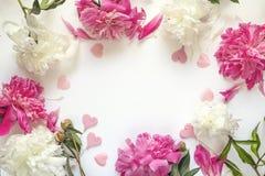 Ram av pioner och dekorativa hjärtor på vit bakgrund plac Royaltyfri Bild