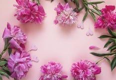 Ram av pions och dekorativa hjärtor på en rosa bakgrund ställe Arkivfoto