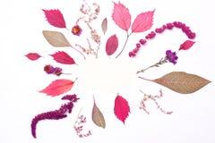 Ram av röda sidor och blommor äpplehösten undersöker torra leafs för sammansättning som plundrar vasen Arkivfoton