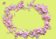 Ram av rosa kronblad på en gul bakgrund Begreppet av D-skönhetsmedel, vår close upp Inskriften av r?tt f?rgar lokaliserat ?ver te royaltyfri foto