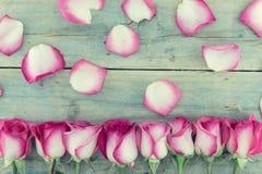 Ram av rosa rosor på lantlig träbakgrund för turkos med c Royaltyfria Foton