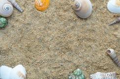 Ram av skaldjur på sandbakgrunden Royaltyfri Bild