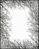 Ram av trädkronan Arkivfoto