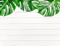 Ram av tropiska sidor Monstera på en vit träbakgrund med utrymme för text Bästa sikt, lekmanna- lägenhet royaltyfri bild