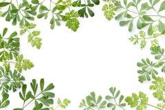 Ram av växt- sidor arkivbild