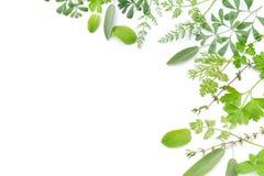 Ram av växt- sidor arkivfoton