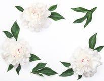 Ram av vita pionblommor och sidor som isoleras på vit bakgrund Lekmanna- lägenhet royaltyfri fotografi