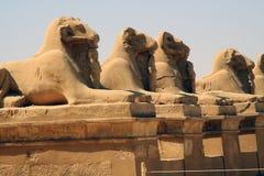 Ram del tempio del doppio di Kôm Ombo fotografia stock libera da diritti