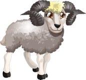 Ram Stock Image